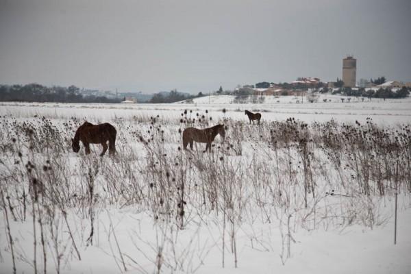 neige Jean chevaux