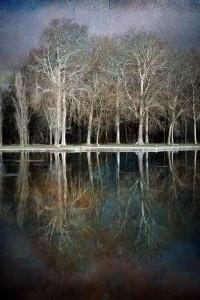 arbres2869