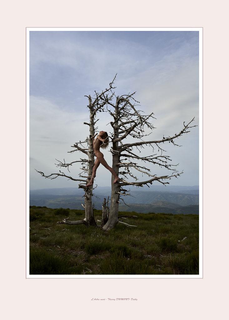l'arbre duthyb10