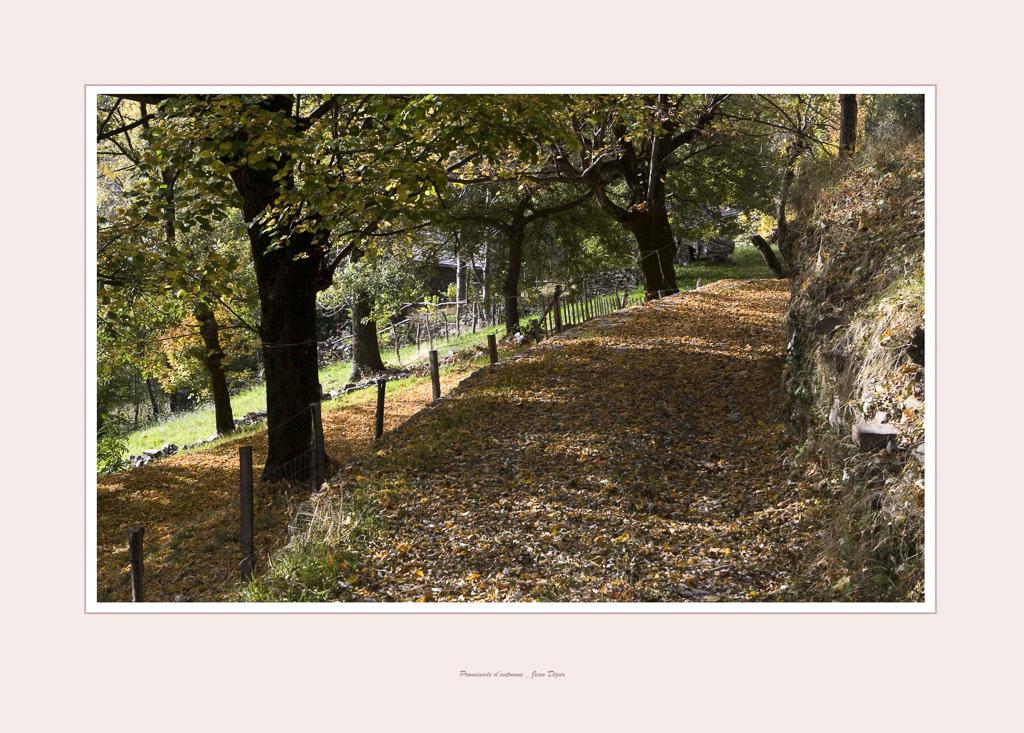 promenade d'automneb10