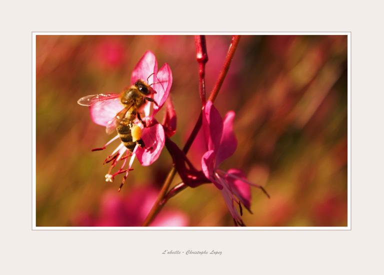 abeille Christophe