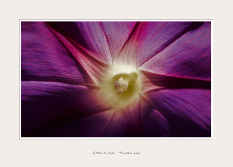 fleur Christophe