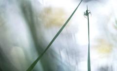 extrait1 araignee