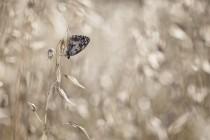 Eclats de lumière - Carole Reboul